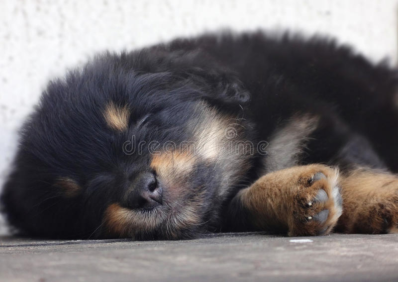Little puppy sleeps sweet. This puppy was found by father and daughter on a playground. They& x27;ve brought it to Animal rescue Kharkiv, Ukraine. Moment of the stock image
