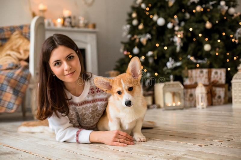Little puppy Welsh Corgi Cardigan plays with his leash with a girl in a white sweater. In front of a fireplace and a Christmas tree royalty free stock photos