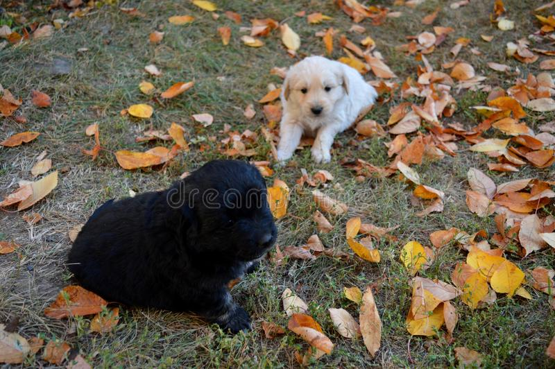 A little puppy in the yard. Little puppy in the yard stock photos