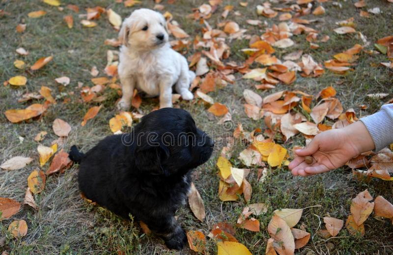 A little puppy in the yard. Little puppy in the yard royalty free stock images