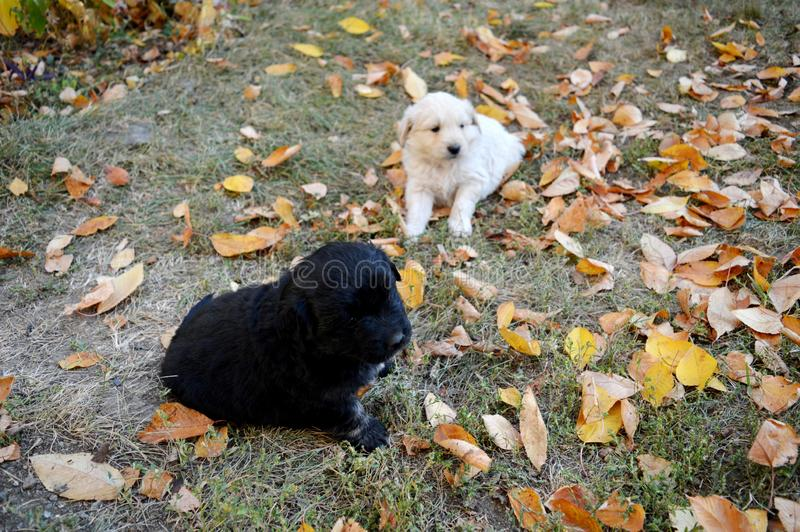 A little puppy in the yard. Little puppy in the yard royalty free stock image