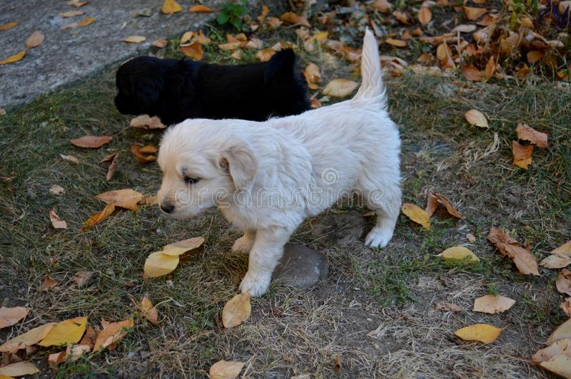 A little puppy in the yard. Little puppy in the yard stock photography