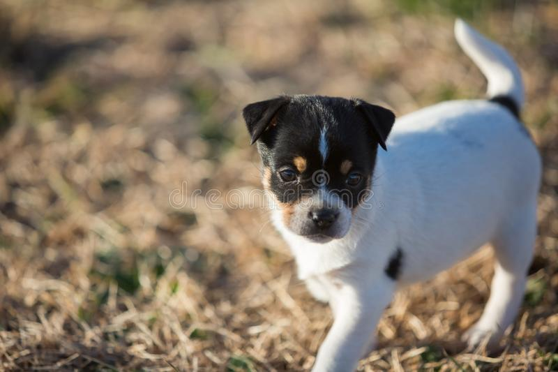 Little puppy in yard royalty free stock photo