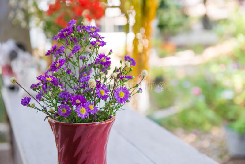 The Little Purple Flower In Red Pot Stock Image - Image of garden ...