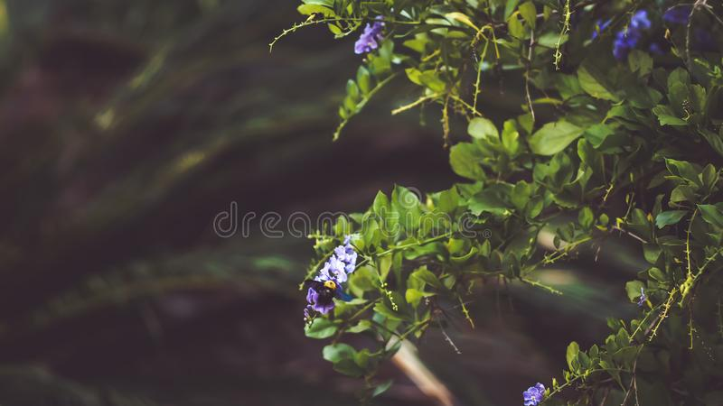 Little purple flower with Tropical leaves, abstract green leaves texture, nature background royalty free stock images