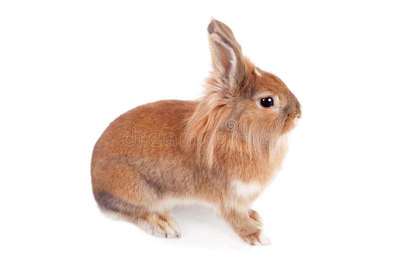 Download Little rabbit stock image. Image of shot, pretty, rabbit - 23875709