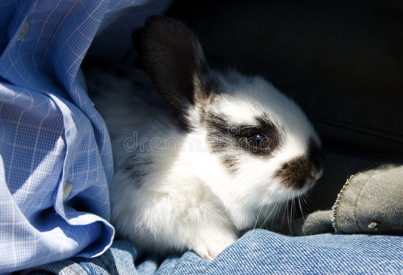 Download Little Rabbit Royalty Free Stock Image - Image: 5009966