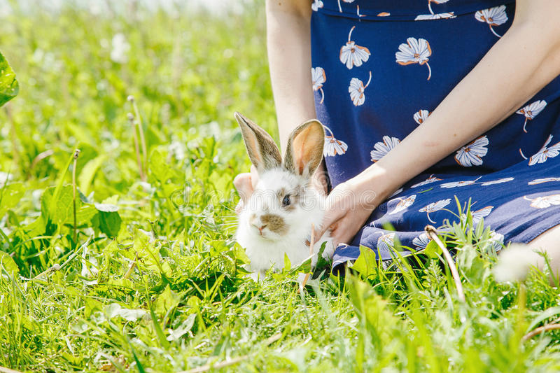 Little rabbit, black and white suit, a bunny eating a green grass, a pet in a wooden box. A small rabbit home, a black and white suit, a bunny eating a green stock images