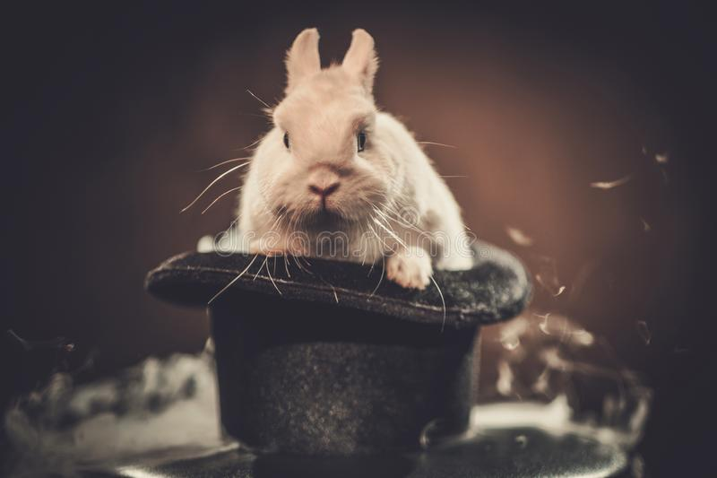 Little rabbit in a magician hat royalty free stock images