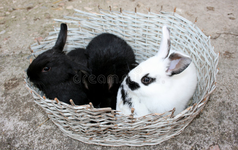 Little rabbits royalty free stock images