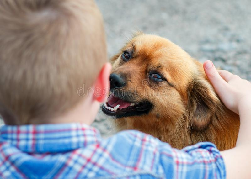 A little red dog with love looks at a child stock photography