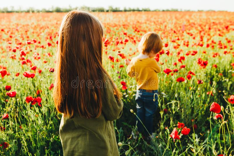 Little red-haired children pick red flowers in the field. Rest on the summer holidays in the village royalty free stock images