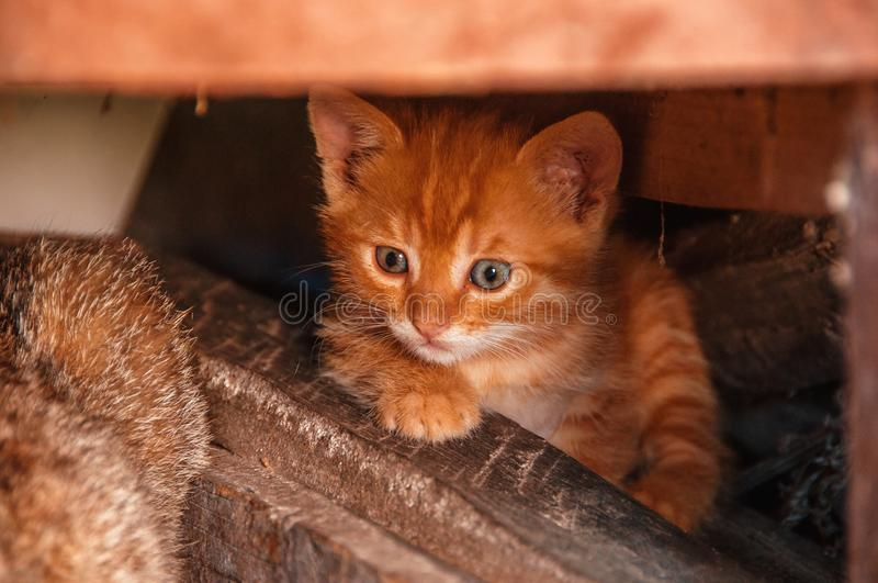 Little red kitten hides under the logs. Homeless cats. Stray cat stock images