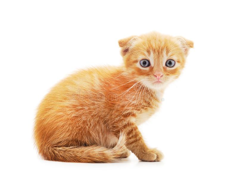 Little red kitten. Isolated on a white background stock image