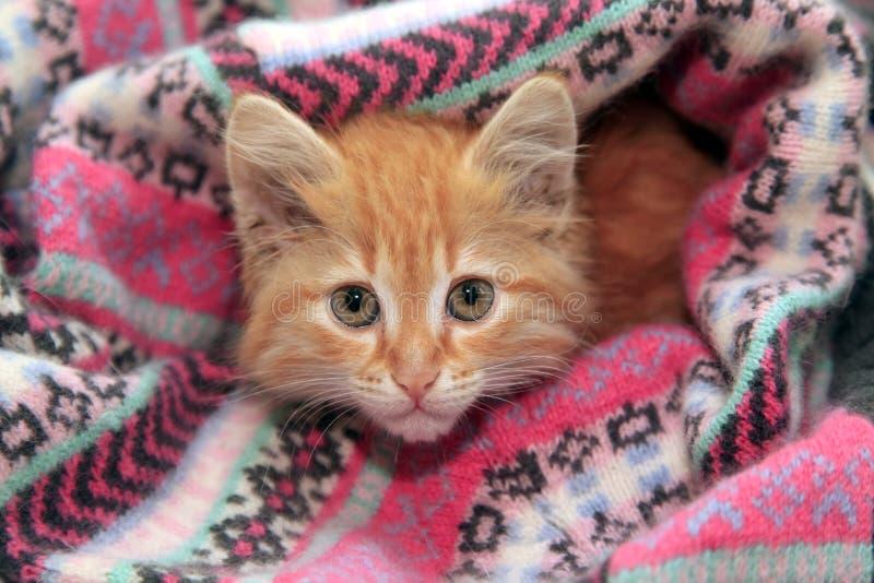 Little red kitten stock photo