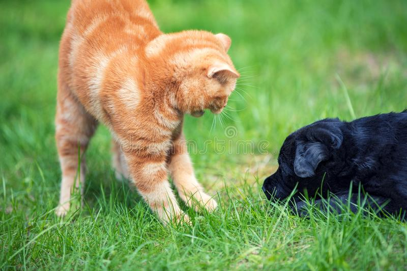 Little kitten playing with little black puppy royalty free stock photos