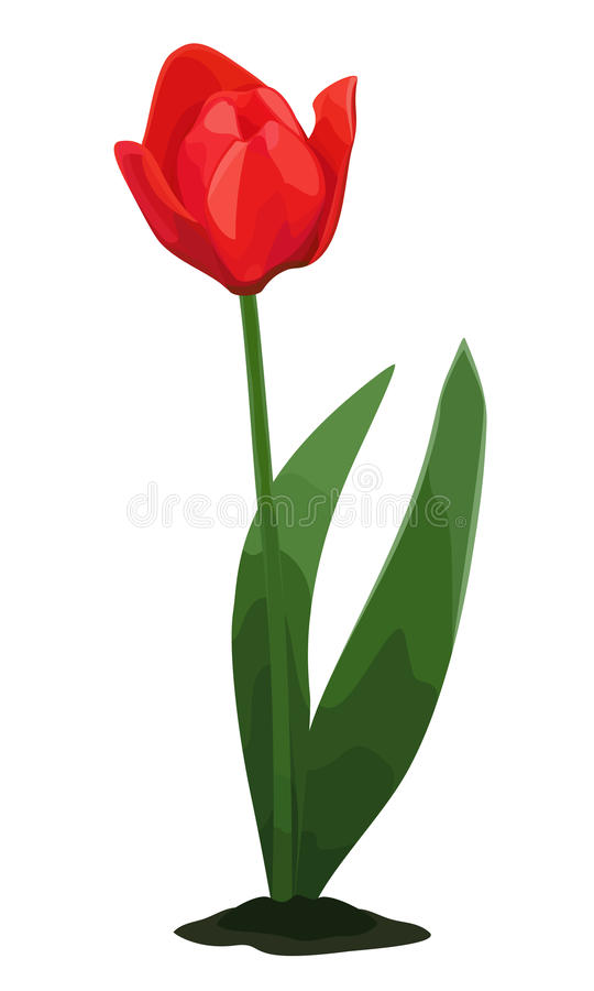 Download Little red tulip stock vector. Image of small, tulip - 23101320