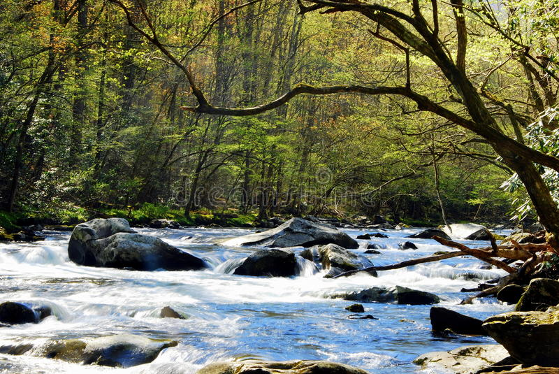 Little River. royalty free stock image