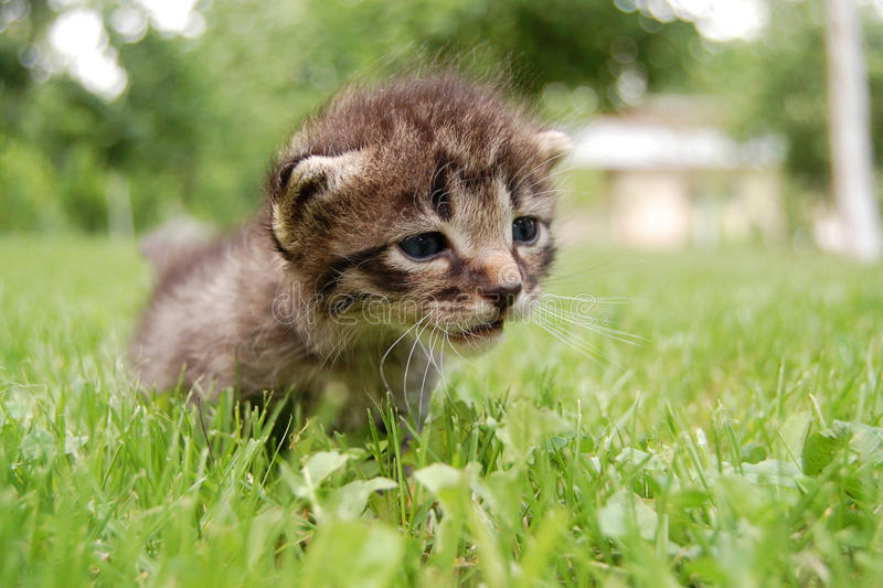 LITTLE SAD CAT. Lying on the grass royalty free stock image