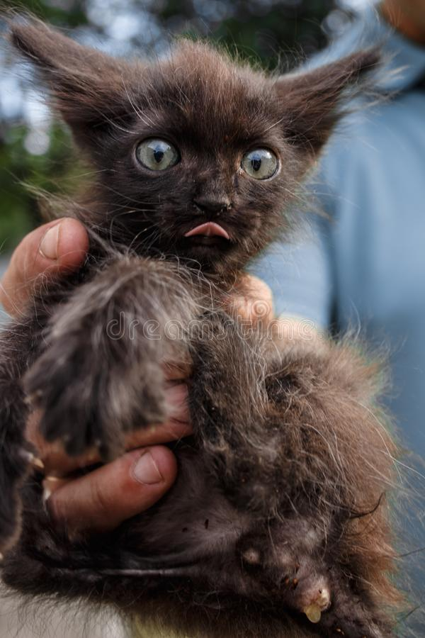 Little scary kitten. Demon cat. Funny kitty weirdo. An unkempt pet stock image