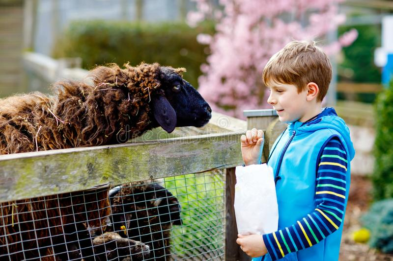 Little school kid boy feeding little goats and sheeps on a kids farm. Beautiful happy healthy child petting animals in stock images