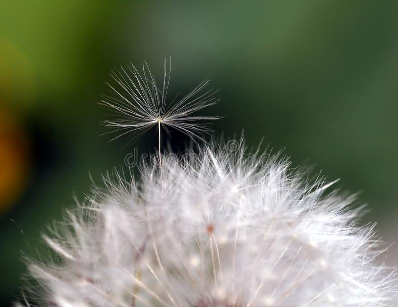 Little Seed Trying To Break Free. Stock Photos