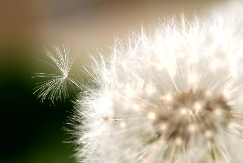 Download Little Seed Trying To Break Free. Stock Image - Image: 792595