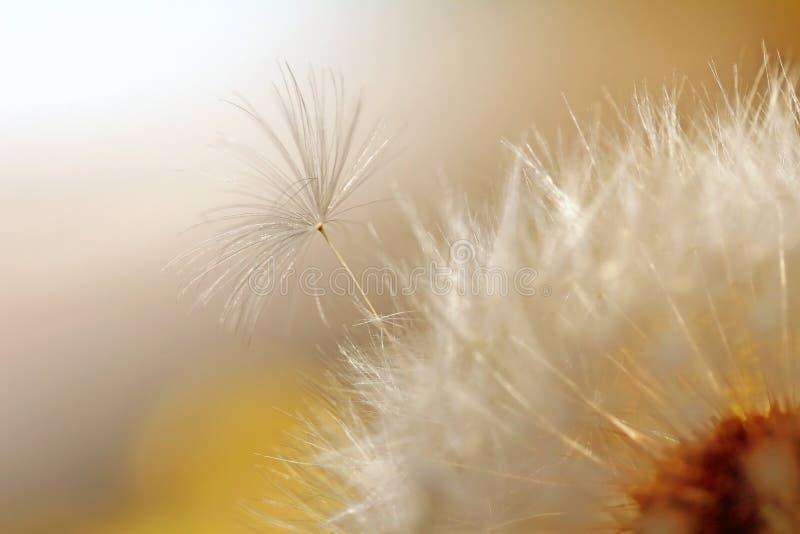 Little seed trying to break free. Little seed trying to break free for freedom stock photos
