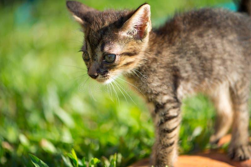 Little short hair cat on women leg. Show pets material picture stock images