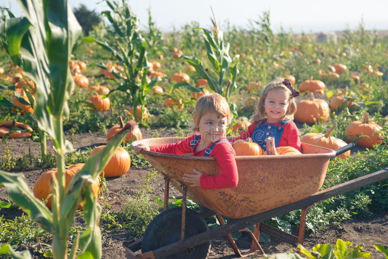 Happy girls sitting inside wheelbarrow at field pumpkin patch. Little sisters in jeans overalls sitting inside old wheelbarrow at farm field pumpkin patch royalty free stock photo
