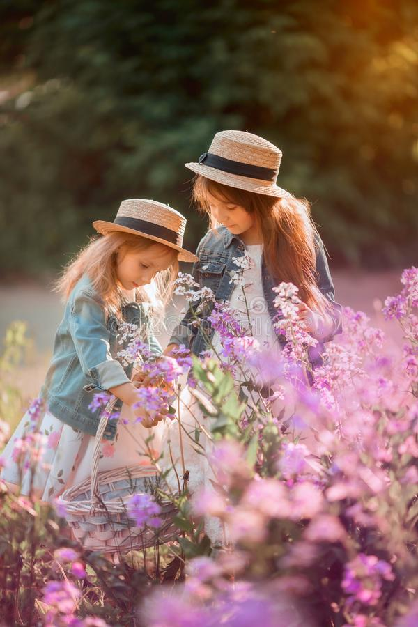 Little sisters outdoor portrait in a pink meadow stock images