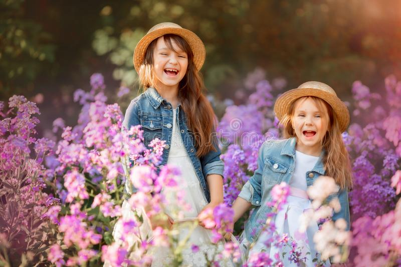 Little sisters outdoor portrait in a pink meadow stock image