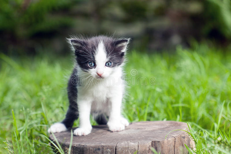 Little small kitten on a stump in the middle of a grass. royalty free stock images