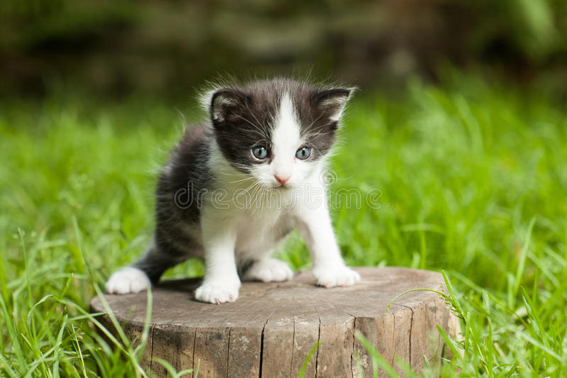 Little small kitten on a stump in the middle of a grass on blur green background. stock photo