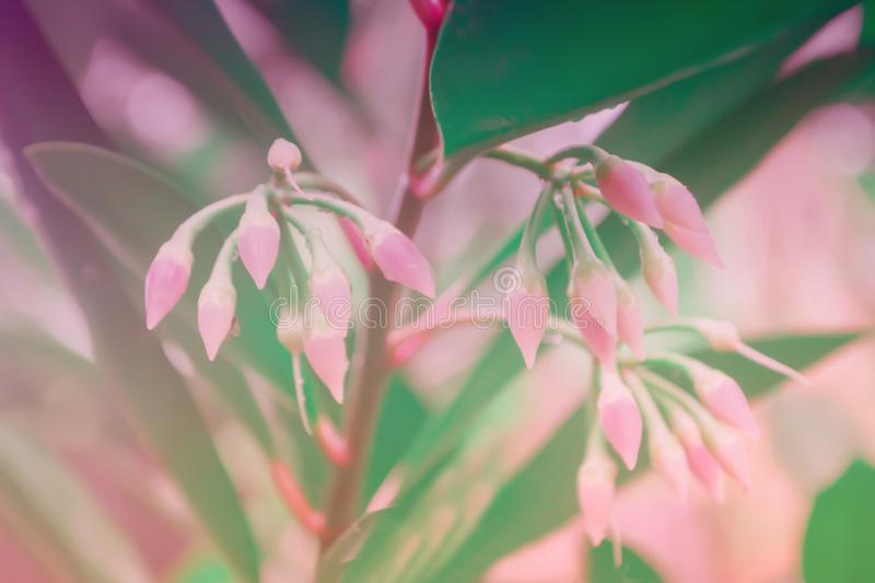 Little small pink flower spring fresh nature photo background. Little small pink flower blooming spring fresh nature outdoor photo background royalty free stock images