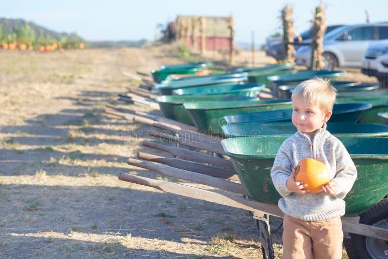 Little boy holding pumpkin near wheelbarrows at farm field patch stock photos