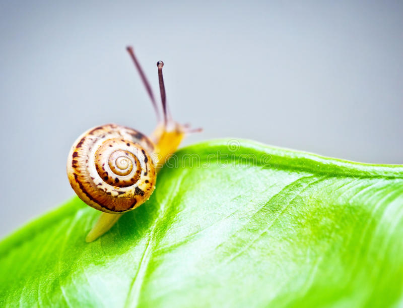 Little snail on green leaf stock photos