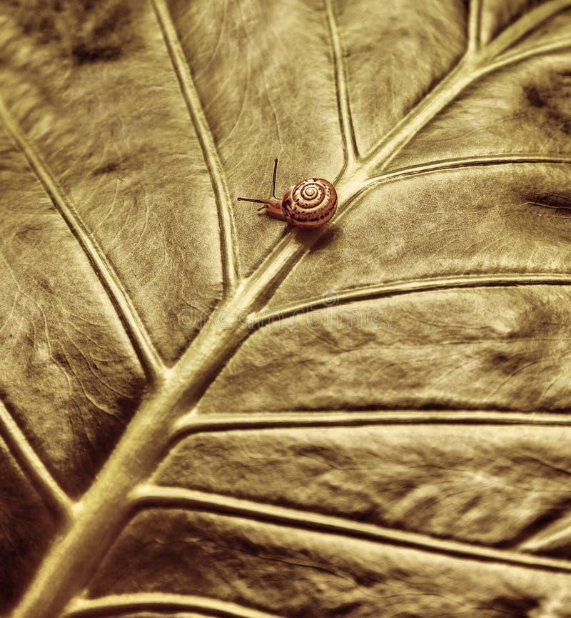 Little Snail On Green Leaf Stock Photos