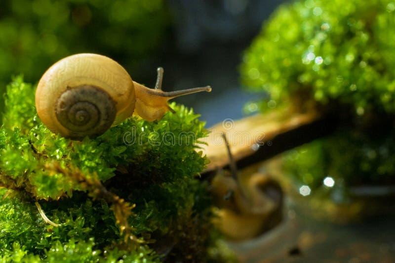 The Little Snail stock photos