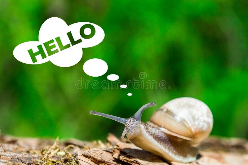 Little snail on a tree branch under the sun. Snail in brown colors on green blurred background. Photo of sunny spring and summer. Little snail on a tree branch stock photo