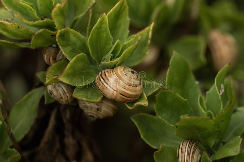 Little snails in the middle of bushes stock photography