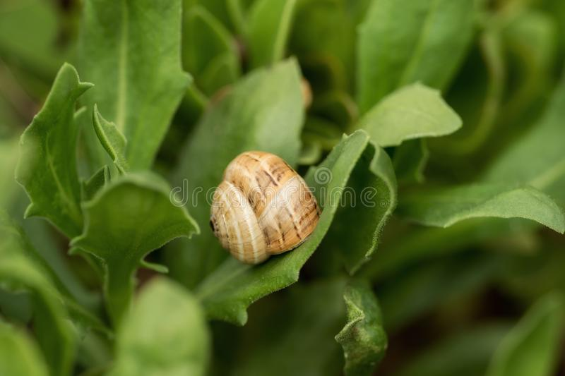 Little snails in the middle of bushes royalty free stock photo