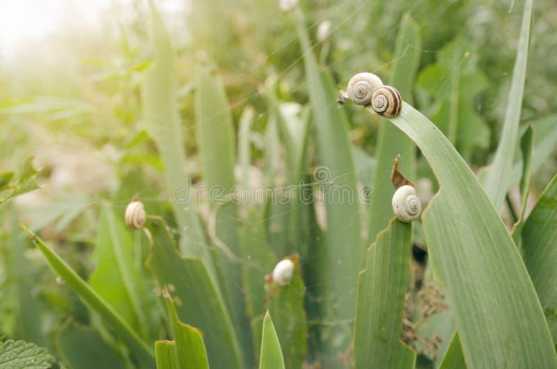 Little Snails stock images
