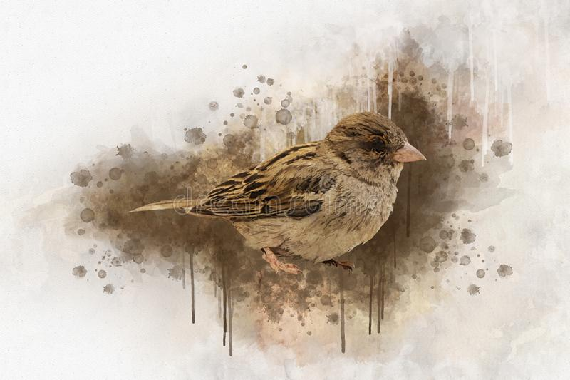 Little sparrow Watercolor Digital Painting vintage effect.  stock illustration