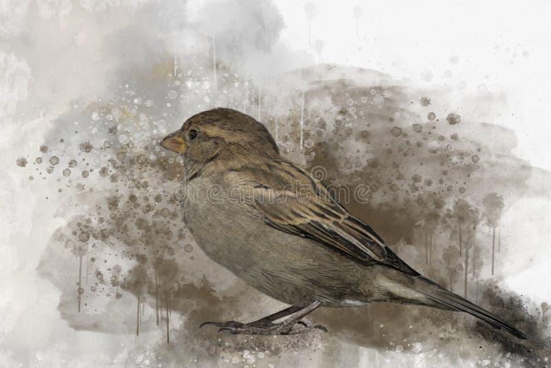Little sparrow Watercolor Digital Painting vintage effect. Bird illustrationLittle sparrow Watercolor Digital Painting vintage. Little sparrow Watercolor Digital vector illustration