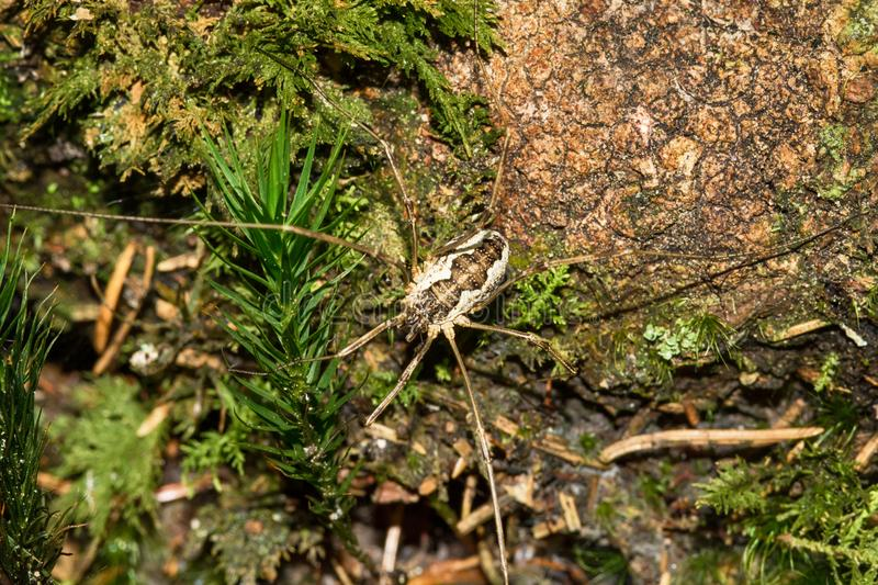 Little spider. In nature from Serbia stock photo