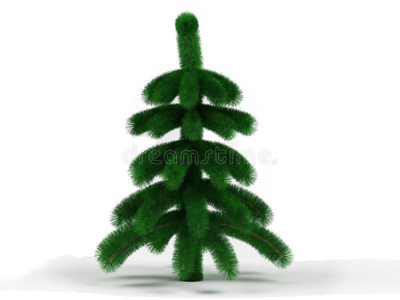 little spruce arkivbild