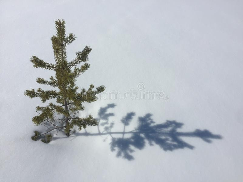 Little tree in the snow royalty free stock photo