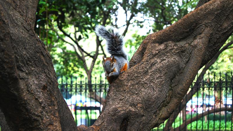 little squirrel that seems to pose for photography stock photography