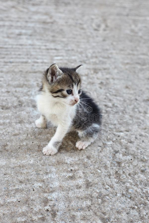 Little stray cat. Homeless kitten. stock images
